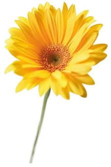 Big yellow flower